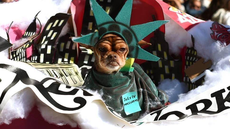 Собака в костюме Статуи Свободы