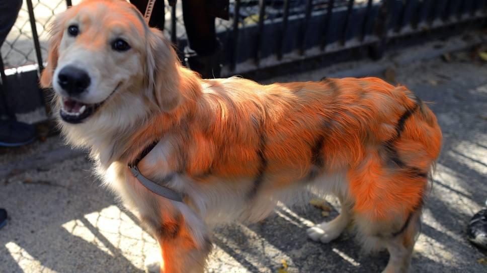 Собака, маскарад, Хэллоуин