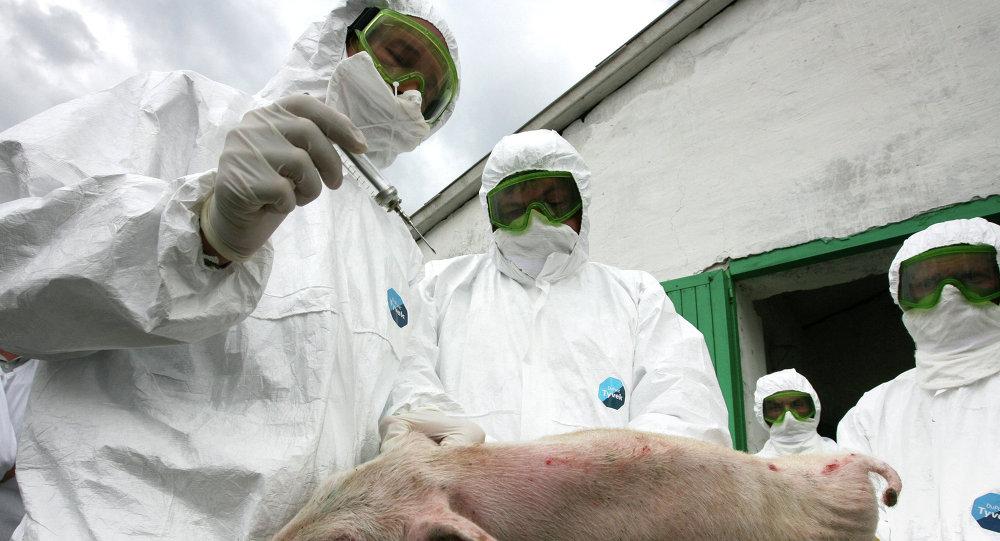 Учения по профилактике свиного гриппа прошли на свиноводческом комплексе в Татарстане