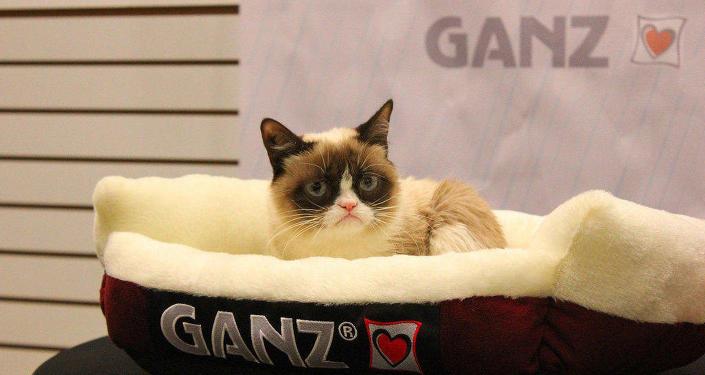 Сердитый кот - Grumpy Cat