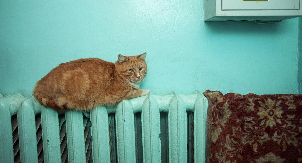 Кот на радыятары ацяплення