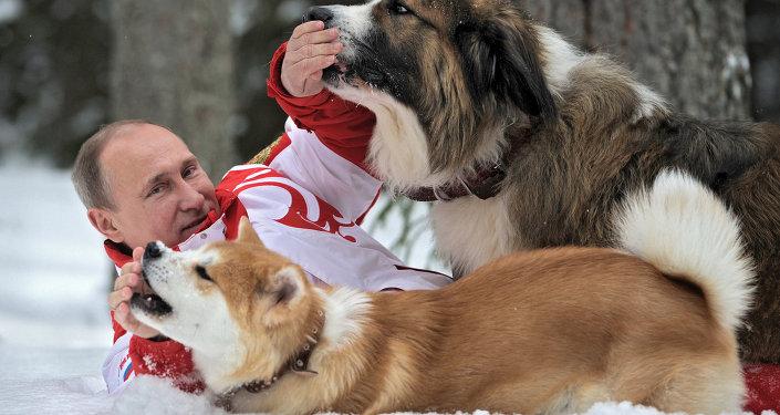 Президент России Владимир Путин с собаками Баффи и Юмэ