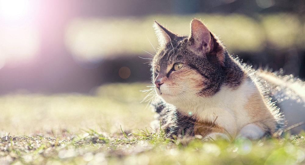 кот грэецца на сонцы