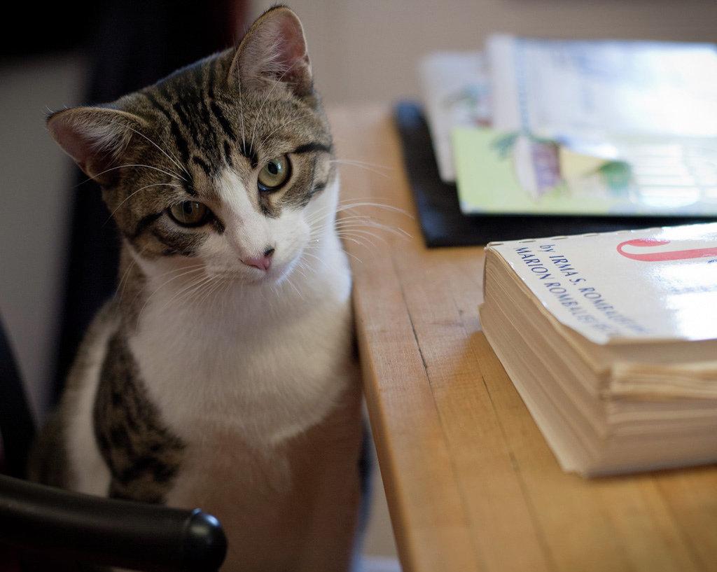 Кошка за письменным столом