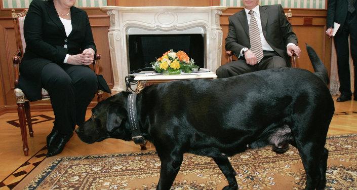 Канцлер Германии Ангела Меркель и президент России Владимир Путин во время встречи в сочинской резиденции президента России Бочаров ручей