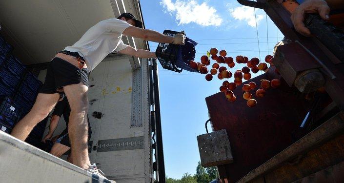 Персики уничтожали при помощи мусоровоза - сок лился рекой