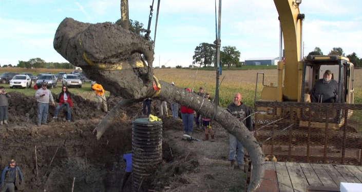 СПУТНИК_Доисторический урожай: ученые нашли останки мамонта под соевым полем в США