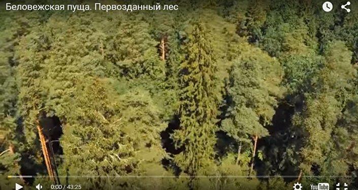 Фильм Беловежская пуща. Первозданный лес