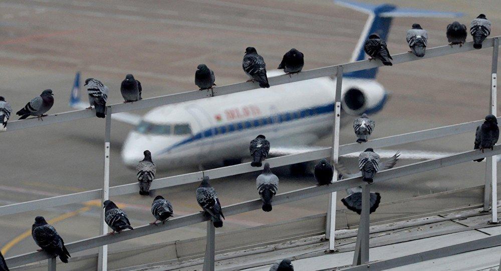 Вид из диспетчерского центра аэропорта