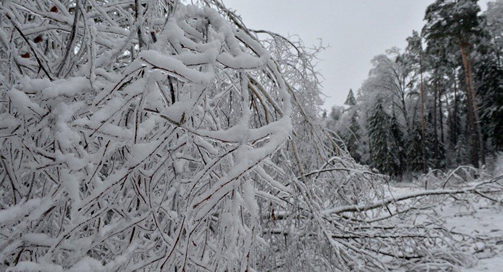 Ледяной дождь в Беларуси