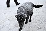 Собака во время снегопада