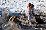 На Сахалине спасают птиц после нефтяного разлива