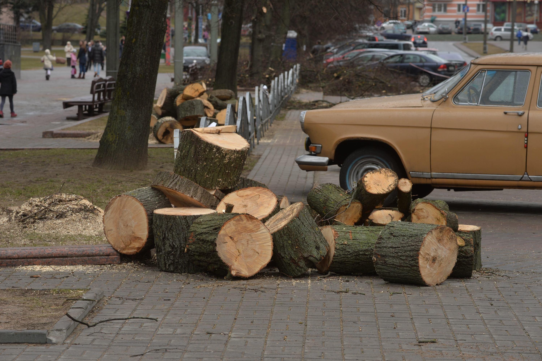 Срубленые деревья на бульваре Мулявина