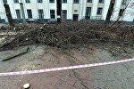 Вырубка деревьев на бульваре Мулявина