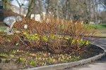 Кусты в парке Риги
