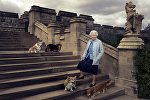 Елизавета II во время прогулки возле Виндзорского замка со своими собаками - корги Уиллоу и Холли и дорги Вулканом и Кэнди