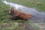 Конь заграз у меліярацыйным канале