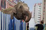 Индийские слоны - цирковые артисты Дзiва
