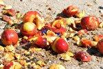 Уничтожение санкционных персиков