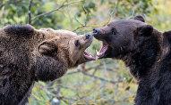 Медзвядзі
