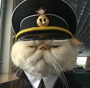 Спутник_Хвостатый экипаж, или Как коты в форме служат на корабле и ходят в море