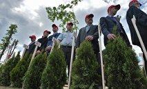 Заводчане готовятся к высадке туй в сквере 70 лет МТЗ
