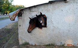 Лошади смотрят в окно стойни