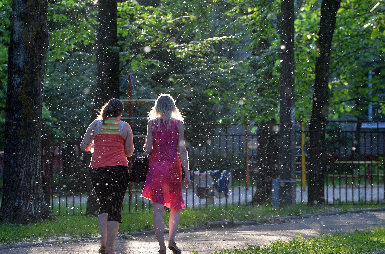 Тополиный пух в Минске