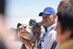На Белагро-2016 выбрали лучшую корову страны