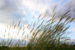 Ветер в поле. Архивное фото
