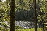 Лес и озеро