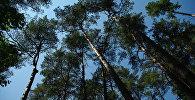 беларускі лес