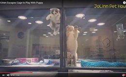 Минутка умиления: ролик побег котенка к щенку покорил интернет