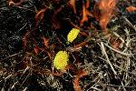Горение сухой травы. Архивное фото