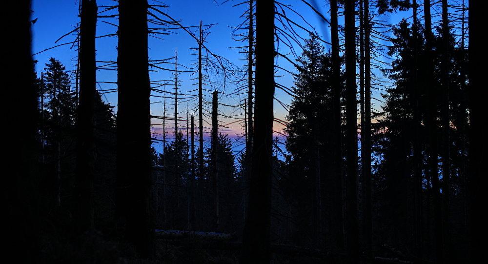 Счужими жонами в лесу фото 759-826