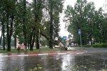 Упавшее дерево в Дзержинске
