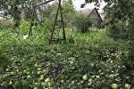 Уничтоженные огороды в Дзержинске