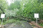 Поваленные деревья в Дзержинске