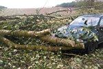 Mitsubushi пострадал от падения дерева