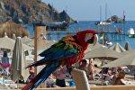 Попугай на одном из пляжей в Анталье