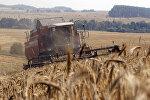 Уборка урожая зерновых в Гродненской области