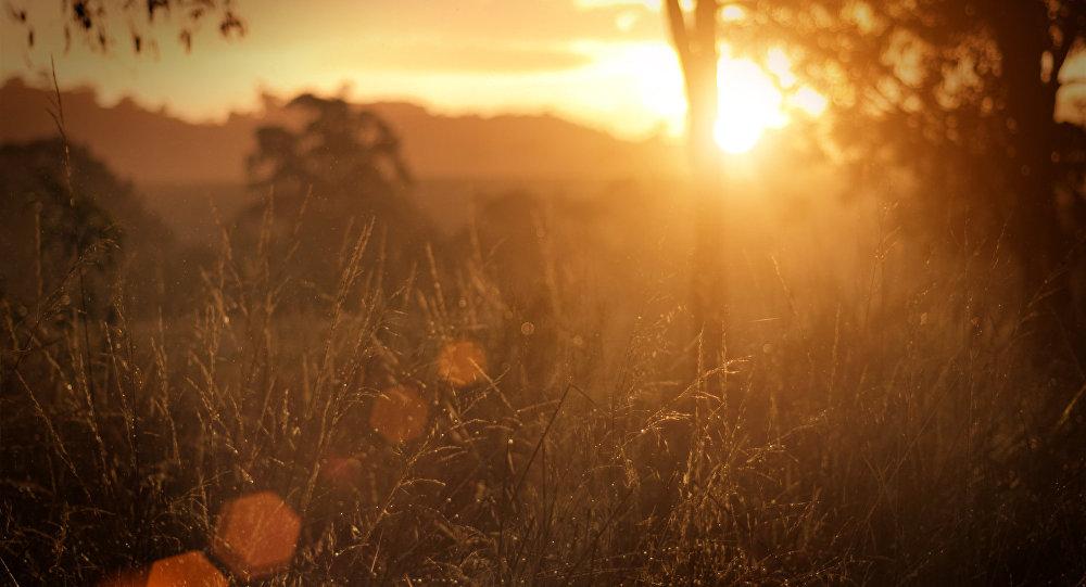 Ооранжевый уровень опасности из-за жары объявлен поюгу страны— Погода вРеспублике Беларусь