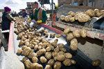 Сортировка картофеля