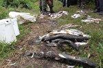 Рыба, выловленная браконьерами