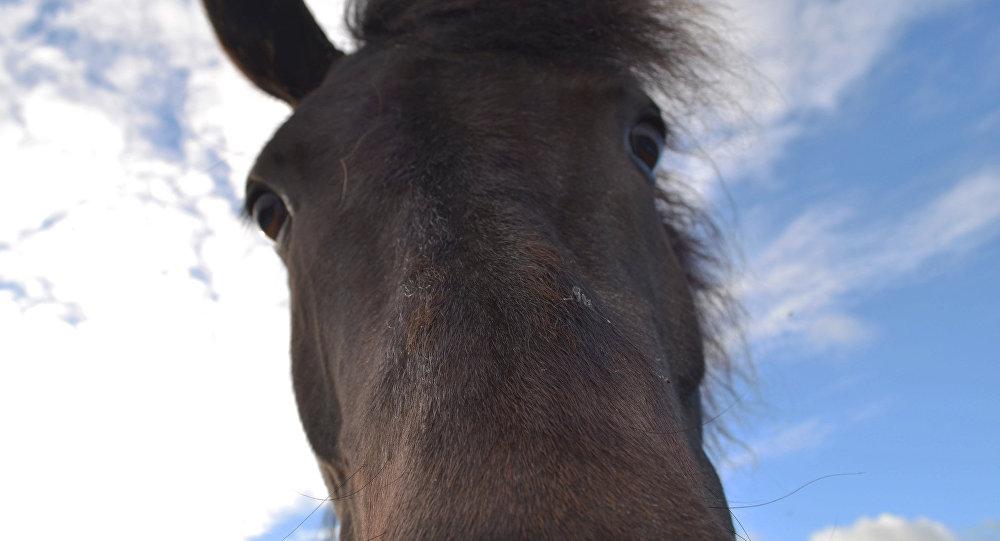 ВКлецком районе лесовоз столкнулся стабуном— семь лошадей погибло
