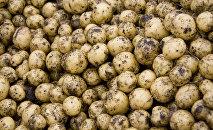 Уборка картофеля, архивное фото