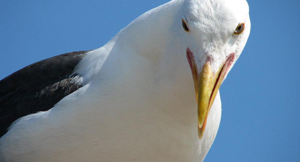Насупермаркет вБритани напала чайка, всех людей эвакуировали