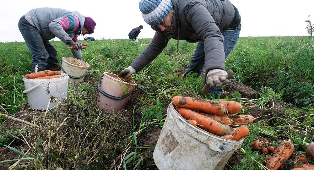 Зарегистрированных нигде неработающих в Республики Беларусь стало менее