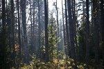 Лес в Беларуси. Архивное фото