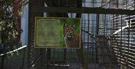 Клетка, дзе жыла рысь у вайсковай частцы унутраных войскаў МУС
